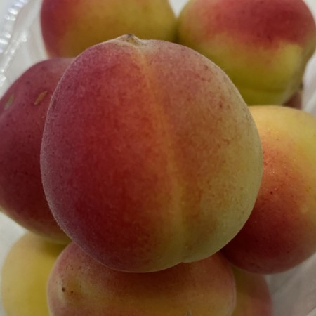 Turkish Apricot - $5/pkt
