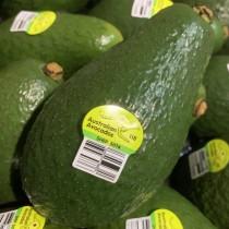 Avocado Shephard - $10/4pcs