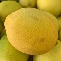 SA Lemon - $4/5pcs