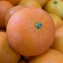 Tangerine - $5/kg