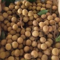 Thai Organic Longan - $10/kg