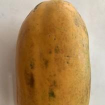 Malaysian Papaya - $4/pcs