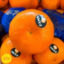South African Mandarin Orange (5pc/pkt)